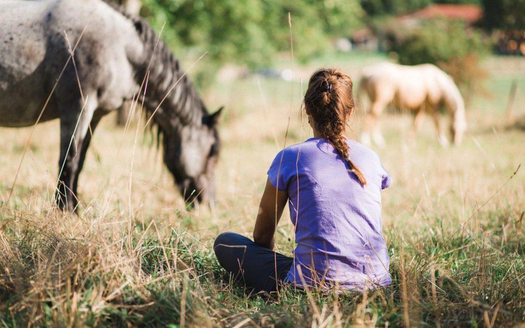 Mon cheminement autour du bien être du cheval
