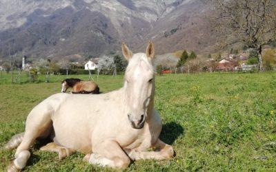La lettre des chevaux 2