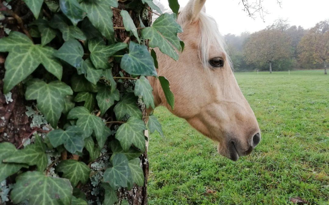 La lettre des chevaux 4
