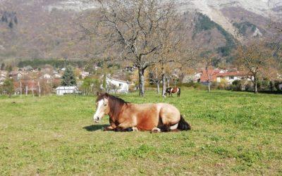 La lettre des chevaux 3
